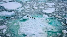 Inusuales fotos muestran criaturas desconocidas en las profundidades del océano Antártico