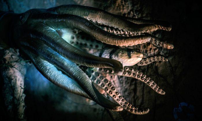 ¿Serán los fósiles vinculados al Kraken pruebas suficientes para demostrar su aterradora existencia?