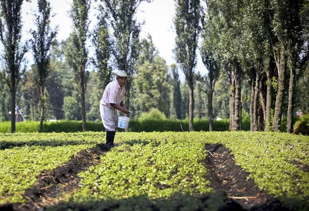 San Gregorio Atlapulco: la aldea mexicana que mantiene la agricultura de la época azteca (Fotos)