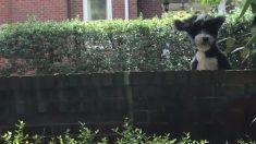 Mujer escuchó ruidos extraños en la pared del vecino. Cuando logró grabar, tuvo que compartirlo