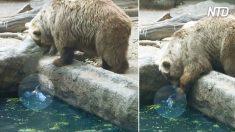 Oso hambriento mira fijamente a un cuervo que se 'ahoga' en piscina, pero luego, sucede algo inimaginable