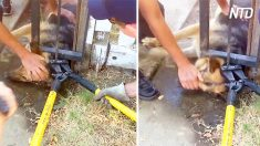 El perro tiene su cabeza atrapada en una valla de hierro; luego los bomberos locales entran en acción