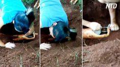 Una reparación de tuberías se convierte en una misión de rescate; absolutamente impactante
