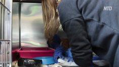 Un gato que milagrosamente sobrevivió estando ensartado en una reja está de regreso a su casa