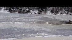 Hombre ve a ciervo atrapado en un río congelado. Mira cómo trata de salvarlo sin ayuda de nadie