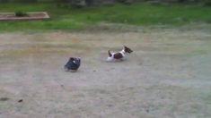 El perro no para de molestar a su amigo pájaro, pero cuando éste ya tiene suficiente; ¡agárrense!