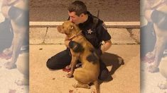 Un hombre ve los policías con dos pitbull, cuando se da cuenta de lo que hacen, toma fotografías