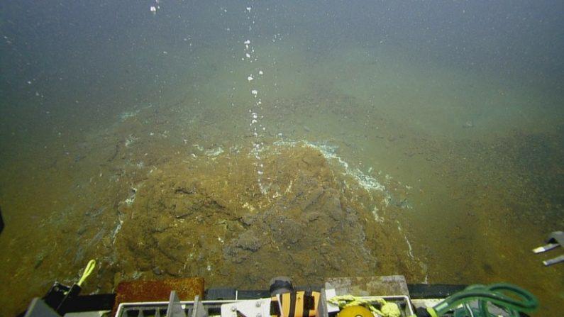 Alerta naranja de tsunami para Venezuela por explosión de volcán submarino
