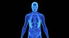 Científicos descubren un nuevo órgano en el cuerpo