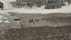 Descubren colonia de 1,5 millones de pingüinos en la Antártida utilizando satélites de la NASA