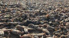 Armagedón marino: aparecen miles de estrellas marinas muertas en la costa del Reino Unido