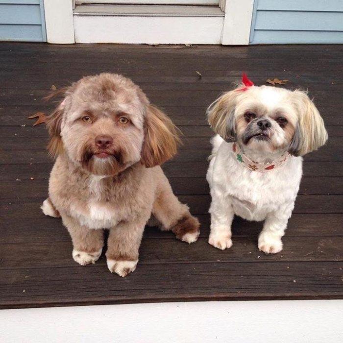 El increíble video del perro con rostro humano