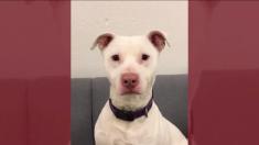 Decían que este perro sordo era 'inadoptable', pero ahora hace algo que ningún otro pudo hacer antes