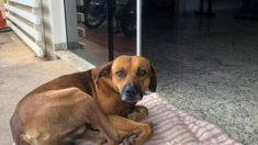 Este perrito hace meses espera a su dueño en la puerta del hospital, su fidelidad enternece a todos