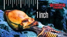 Esqueleto de Atacama: ¿Extraterrestre de 6 pulgadas o niña de 6 años?