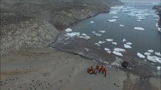 """Masiva colonia de pingüinos es descubierta en las """"Islas Peligro"""" de la Antártida"""