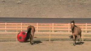 Dos caballos encuentran una pelota gigante: ¿te imaginas que hicieron?