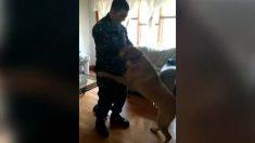 Cuando este militar llega a casa, sus perros no pueden contenerse de una manera graciosa