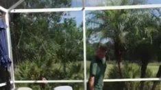 Retiran cocodrilo de casi tres metros bañándose en una piscina de Florida