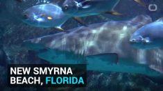Destinos donde ocurren la mayoría de los ataques de tiburones