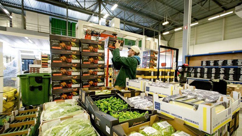 """Las cajas de frutas y verduras están listas para la exportación. El gobernador de Guanajuato, Miguel Márquez, aseguró que el mercado holandés es """"la gran oportunidad"""". AFP / ANP / Robin van Lonkhuijsen / Netherlands OUT (Foto: ROBIN VAN LONKHUIJSEN/AFP/Getty Images)"""