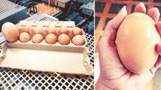 El huevo más grande aparece en los titulares: la gallina debe haber sentido mucho dolor