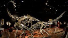 Pagan 2,8 millones por dos esqueletos de dinosaurio en una subasta en París