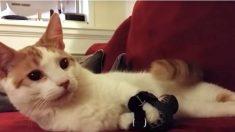 Este gato nació con una rara enfermedad, mira lo que le hizo a sus patas delanteras