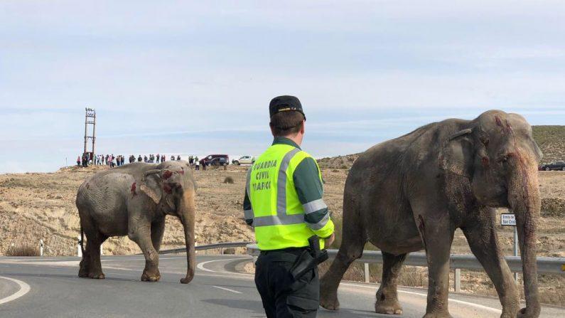 Murió un elefante al volcar un camión de circo