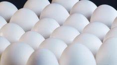 EE. UU. retira 200 millones de huevos contaminados por Salmonella