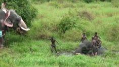 El elefante queda atrapado por horas en un pozo fangoso, ¡mira la creativa solución de los aldeanos!