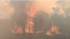 Un pasajero filma incendio en Sydney mientras su tren pasa a través del humo y el fuego