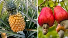 Estas 10 impresionantes fotos demuestran que la mayoría no tenemos idea de cómo se cultiva la comida