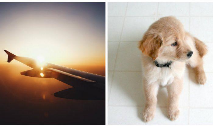 No podía soportar sentarse junto al perro en el avión: cuando habla con el dueño, no es lo que pensó