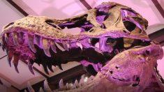 Se encuentran en Escocia las huellas del dinosaurio más grande de la historia que ha caminado por la Tierra