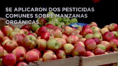 Los científicos encuentran la manera más eficaz de eliminar los pesticidas de las manzanas