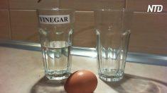 Hombre pone huevo en vinagre y colorante de comida al final del segundo día, resulta increíble