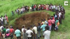 Los elefantes se encuentran atrapados en un gran pozo. Lo que hace un gran grupo de personas: es un esfuerzo de equipo