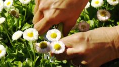 La cocina floral: transportando a los comensales a nuevos mundos de sabor