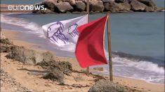 """España advierte en qué playas pueden haber """"carabelas portuguesas"""""""