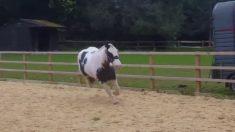 Aburrido del entrenamiento este caballo decide un salto a la libertad