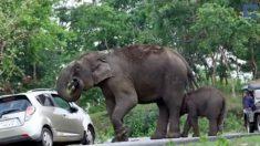 Turistas tratan de tomar fotos de elefantes. Pero cuando los atrapan – obtienen más de lo que esperaban