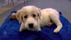 Este lindo cachorro se parece a cualquier otro, pero tu corazón se detendrá cuando se ponga de pie