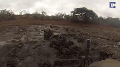 Rinoceronte queda atascado en el barro. Cuando intentan rescatarlo con excavadora, no es nada fácil