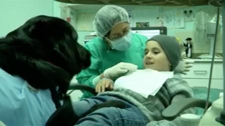 Perros chilenos ayudan a niños autistas para que no tengan miedo al dentista