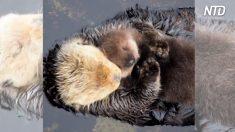 Estas peludas mamás abrazan a sus pequeños, pero una sorpresa pondrá una sonrisa en tu rostro
