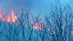 Incendio forestal en Nuevo México se extiende hasta más de 16.500 acres