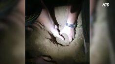 Policía de Brasil rescata con vida recién nacido enterrado siete horas