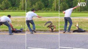 'Patea' a un cocodrilo en la autopista. Parece abusivo, pero intentaba ayudarlo