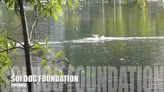Luego de la inundación, el equipo de rescate viaja en bote, pero faltaba salvar a este perro